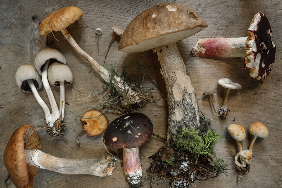 Mushrooms as Brain Food